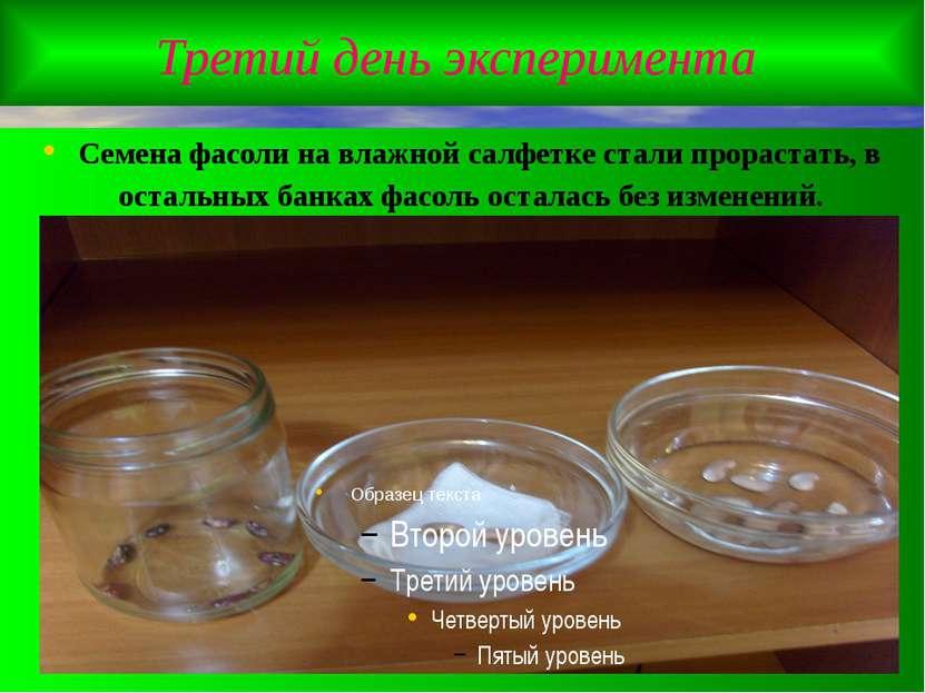 Третий день эксперимента Семена фасоли на влажной салфетке стали прорастать, ...
