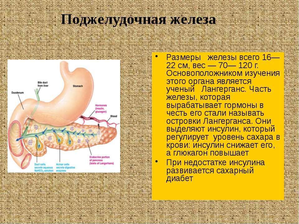 Размеры железы всего 16—22 см, вес — 70— 120 г. Основоположником изучения это...