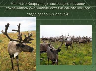 На плато Кваркуш до настоящего времени сохранились уже жалкие остатки самого ...