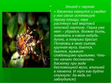 Эпизод с пауком: « Васютка нагнулся и увидел у ног своих истлевшую тушку птиц...