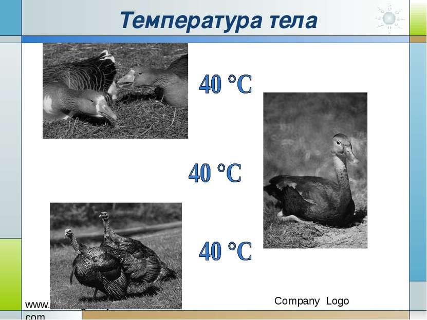 Температура тела