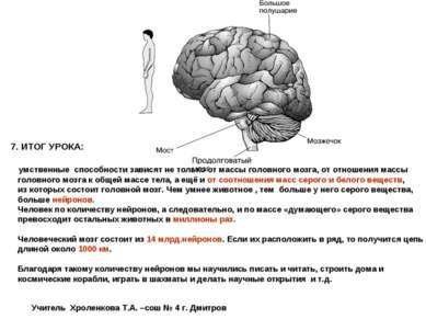 7. ИТОГ УРОКА: умственные способности зависят не только от массы головного мо...