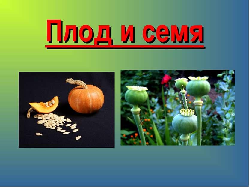 Плод и семя