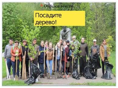 Посадите дерево!