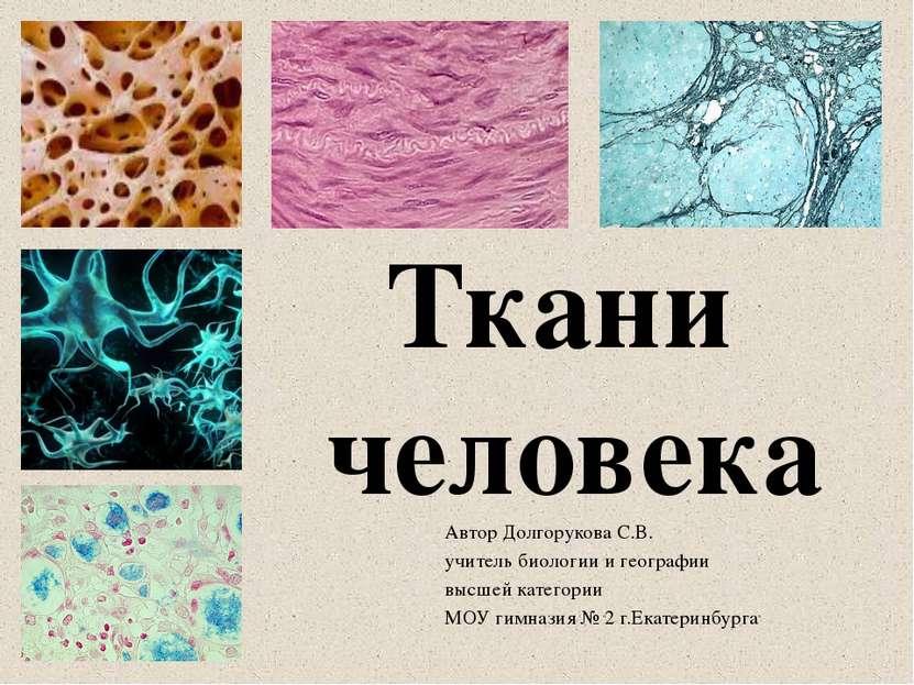 Автор Долгорукова С.В. учитель биологии и географии высшей категории МОУ гимн...