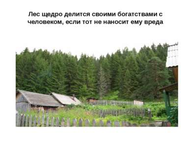 Лес щедро делится своими богатствами с человеком, если тот не наносит ему вреда