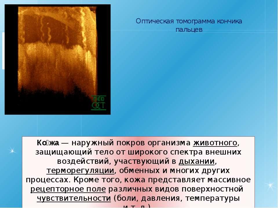 Ко жа— наружный покров организма животного, защищающий тело от широкого спек...