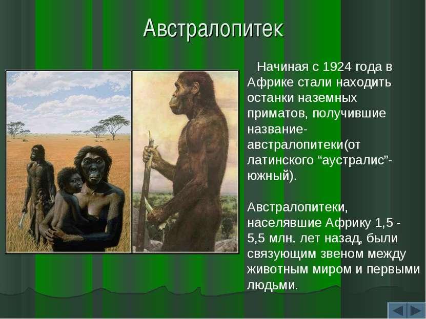 Австралопитек Начиная с 1924 года в Африке стали находить останки наземных пр...