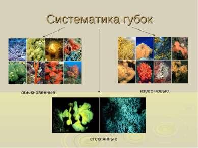 Систематика губок обыкновенные известковые стеклянные