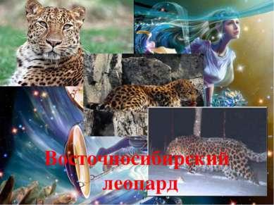 Восточносибирский леопард