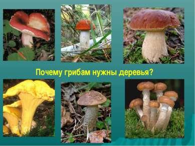 Почему грибам нужны деревья?