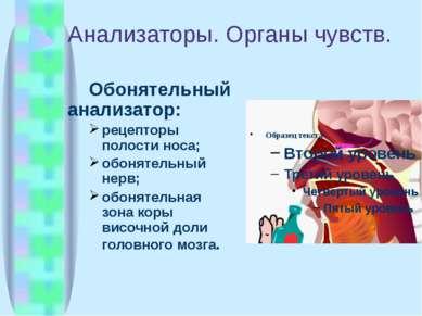 Анализаторы. Органы чувств. Обонятельный анализатор: рецепторы полости носа; ...