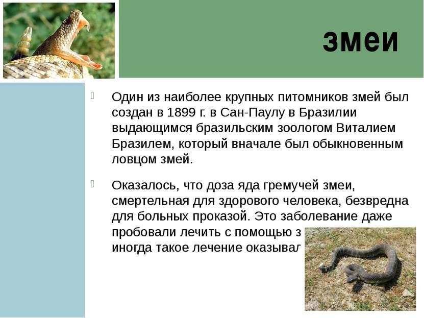 змеи Один из наиболее крупных питомников змей был создан в 1899 г. в Сан-Паул...