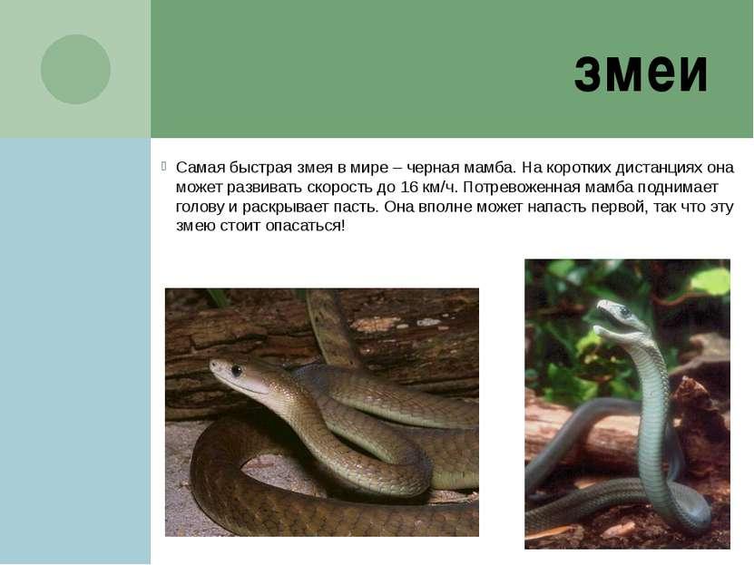 змеи Самая быстрая змея в мире – черная мамба. На коротких дистанциях она мож...