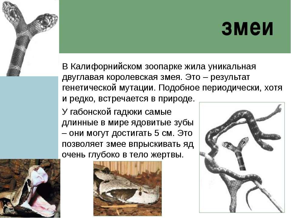 змеи В Калифорнийском зоопарке жила уникальная двуглавая королевская змея. Эт...