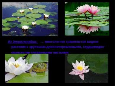 Из Энциклопедии: … многолетнее травянистое водное растение с крупными длинноч...