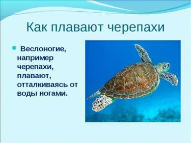 Как плавают черепахи Веслоногие, например черепахи, плавают, отталкиваясь от ...