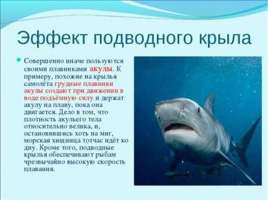 Эффект подводного крыла Совершенно иначе пользуются своими плавниками акулы. ...