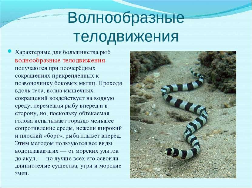 Волнообразные телодвижения Характерные для большинства рыб волнообразные тело...