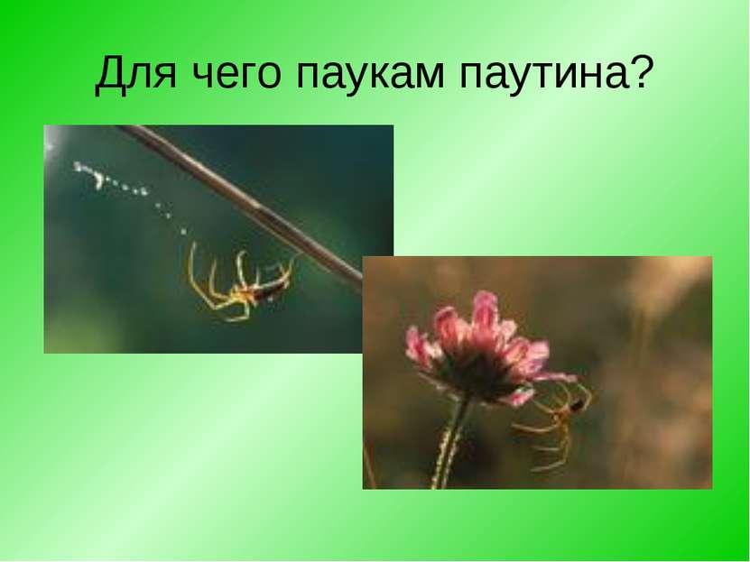 Для чего паукам паутина?