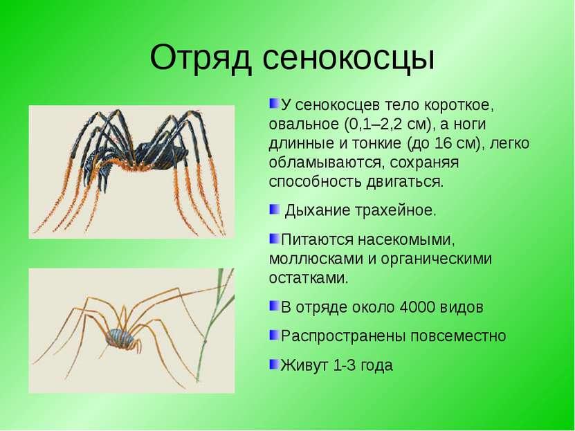 Отряд сенокосцы У сенокосцев тело короткое, овальное (0,1–2,2 см), а ноги дли...