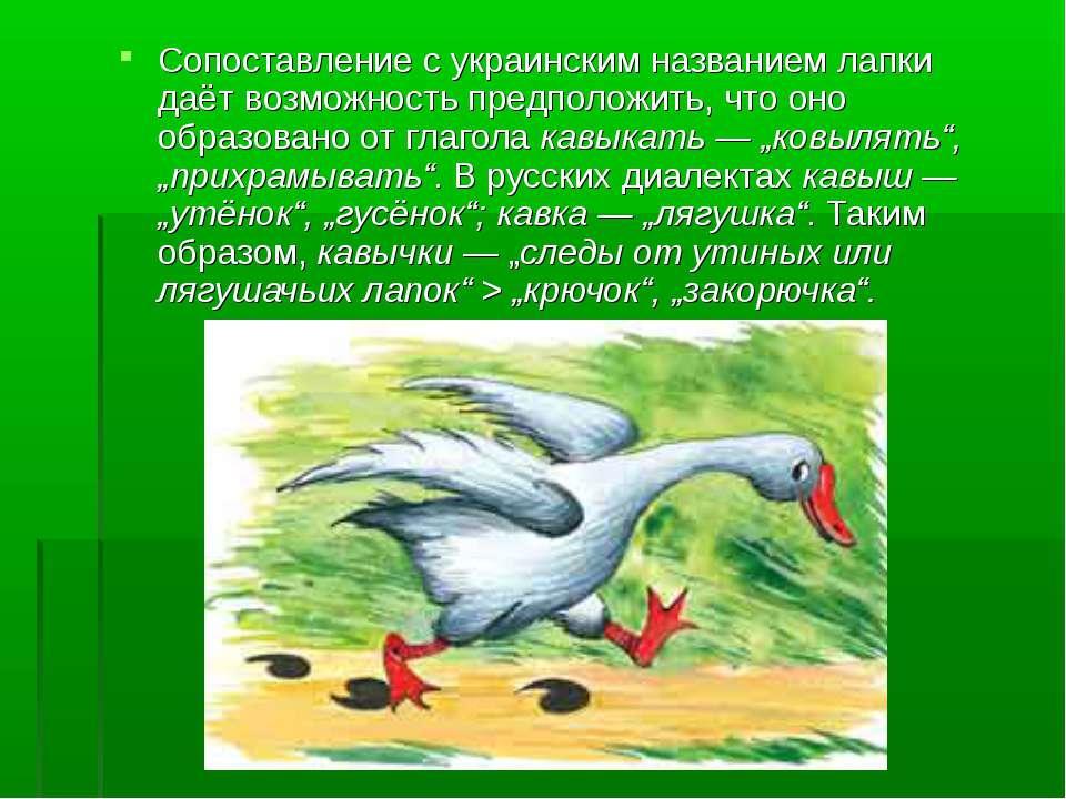 Сопоставление сукраинским названием лапки даёт возможность предположить, что...