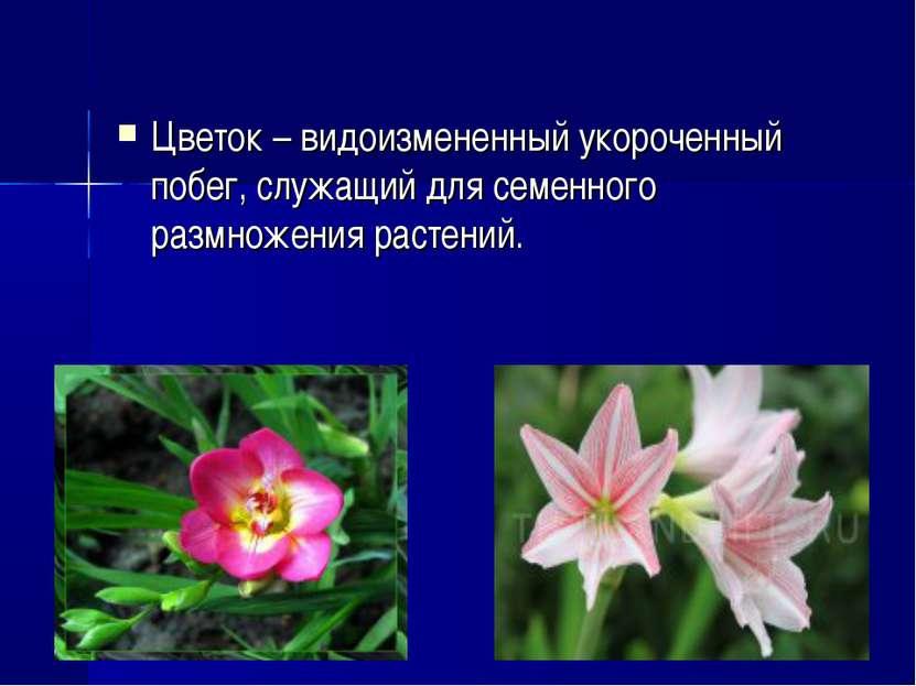 Цветок– видоизмененный укороченный побег, служащий для семенного размножения...