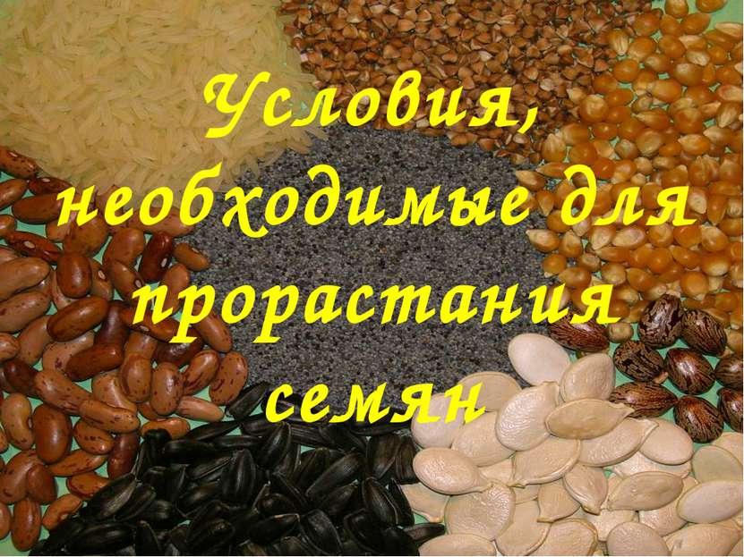 Условия, необходимые для прорастания семян