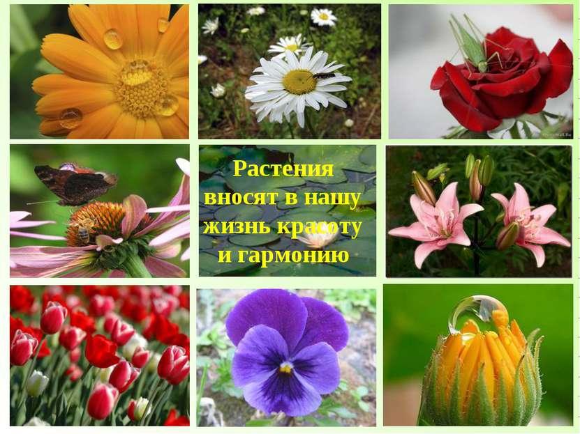 Растения вносят в нашу жизнь красоту и гармонию