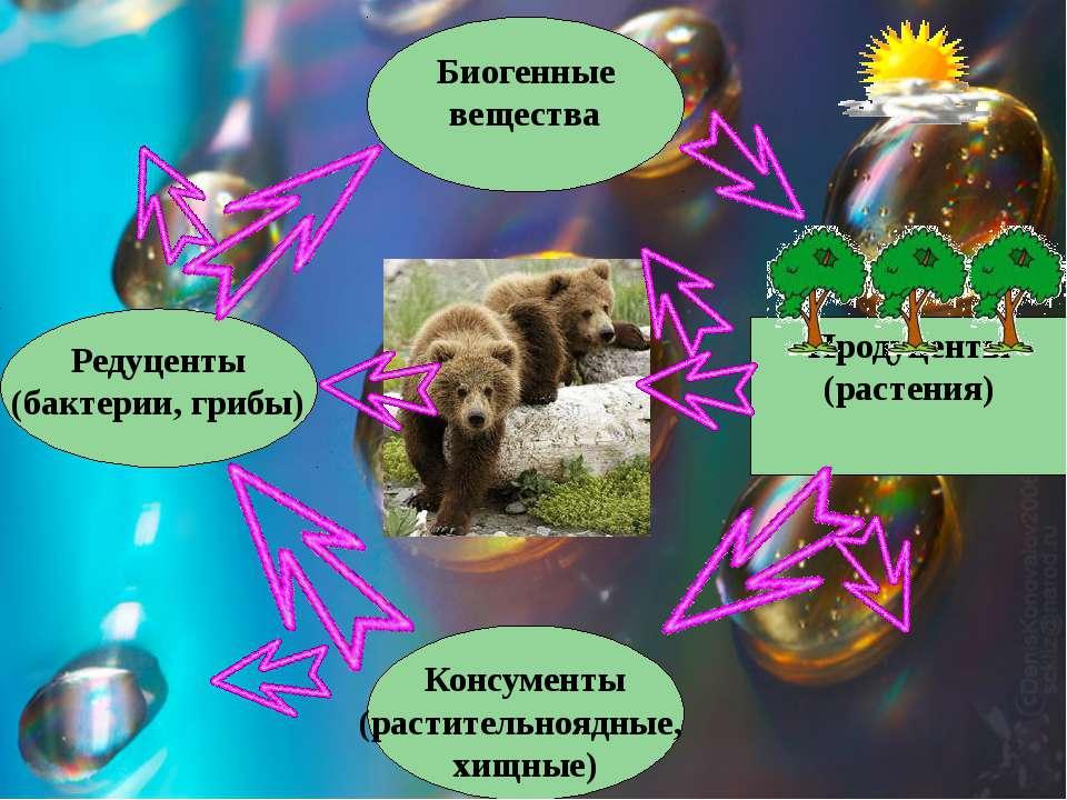 Биогенные вещества Продуценты (растения) Консументы (растительноядные, хищные...