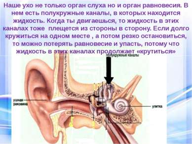 Наше ухо не только орган слуха но и орган равновесия. В нем есть полукружные ...