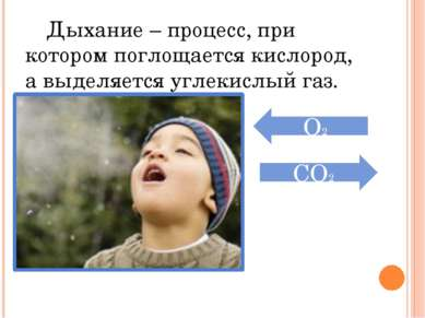 Дыхание – процесс, при котором поглощается кислород, а выделяется углекислый ...