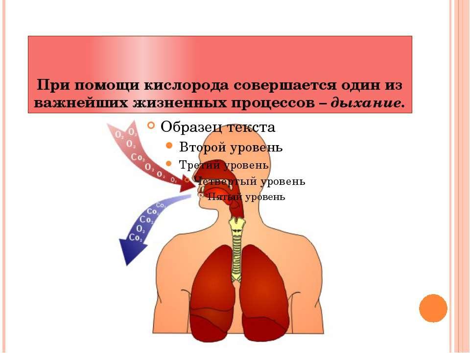 При помощи кислорода совершается один из важнейших жизненных процессов – дыха...