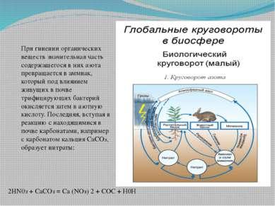 При гниении органических веществ значительная часть содержащегося в них азота...
