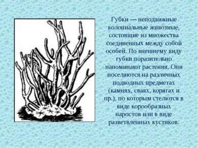 Губки — неподвижные колониальные животные, состоящие из множества соединенных...