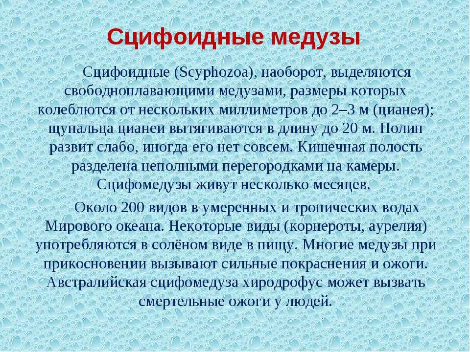 Сцифоидные медузы Сцифоидные (Scyphozoa), наоборот, выделяются свободноплаваю...