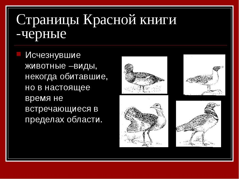 Страницы Красной книги -черные Исчезнувшие животные –виды, некогда обитавшие,...