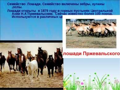 Семейство Лошади. Семейство включены зебры, куланы ,ослы. Лошади открыты в 18...