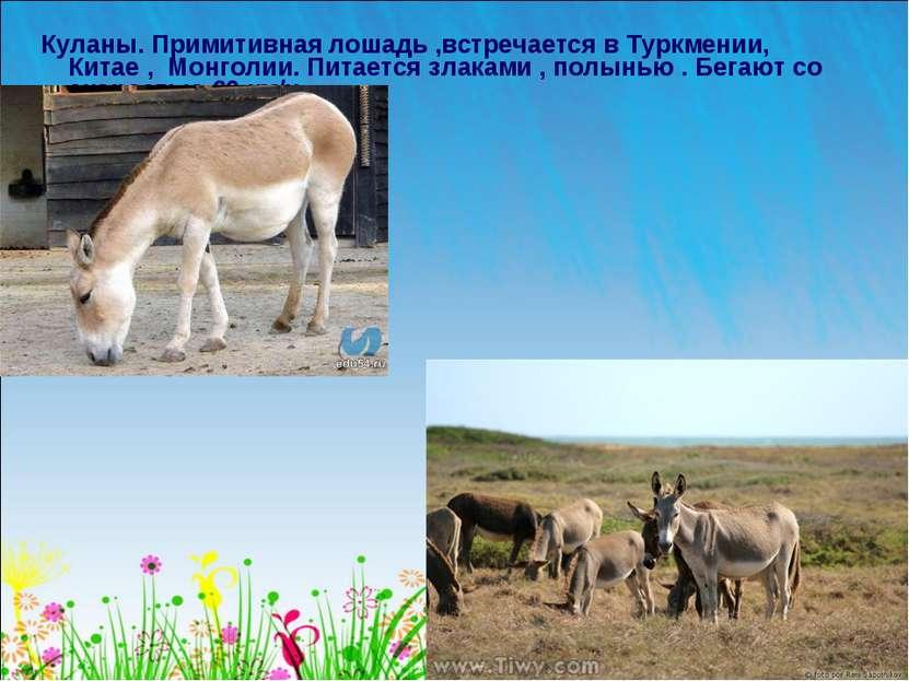 Куланы. Примитивная лошадь ,встречается в Туркмении, Китае , Монголии. Питает...