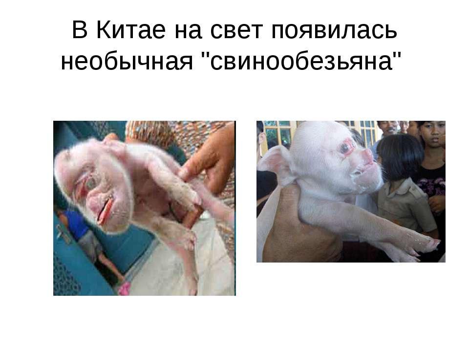 """В Китае на свет появилась необычная """"свинообезьяна"""""""