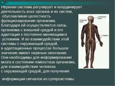 Нервная система регулирует и координирует деятельность всех органов и их сист...