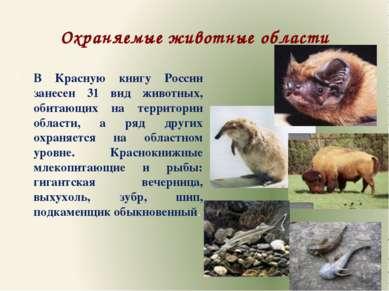 Охраняемые животные области В Красную книгу России занесен 31 вид животных, о...