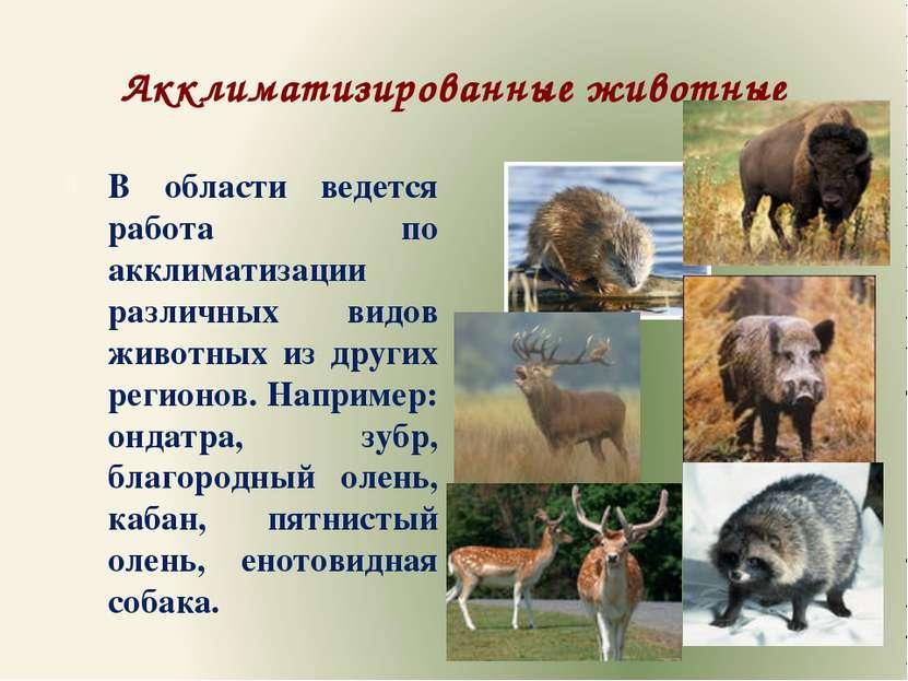 Акклиматизированные животные В области ведется работа по акклиматизации разли...
