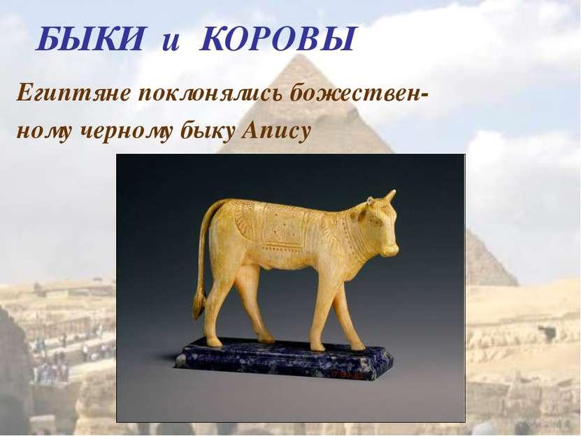 БЫКИ и КОРОВЫ Египтяне поклонялись божествен- ному черному быку Апису