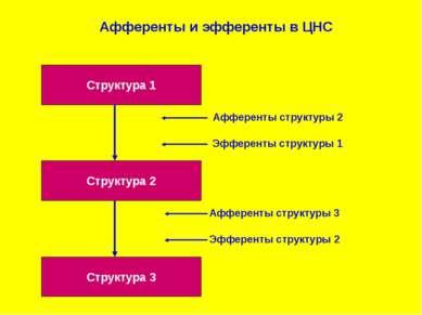 Структура 1 Структура 3 Структура 2 Афференты и эфференты в ЦНС
