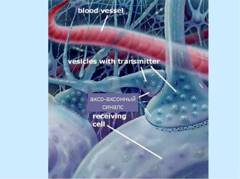 аксо-аксонный синапс