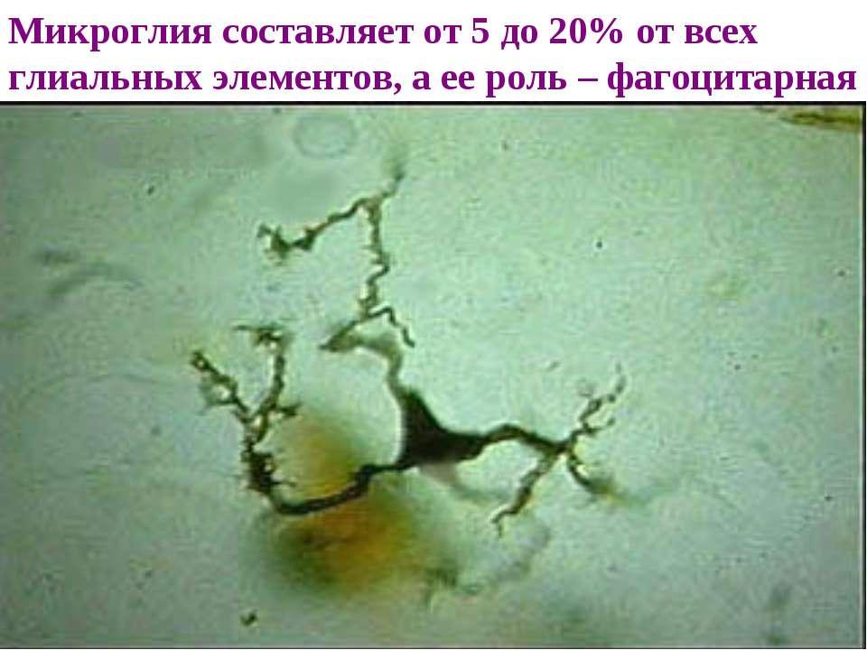 Микроглия составляет от 5 до 20% от всех глиальных элементов, а ее роль – фаг...