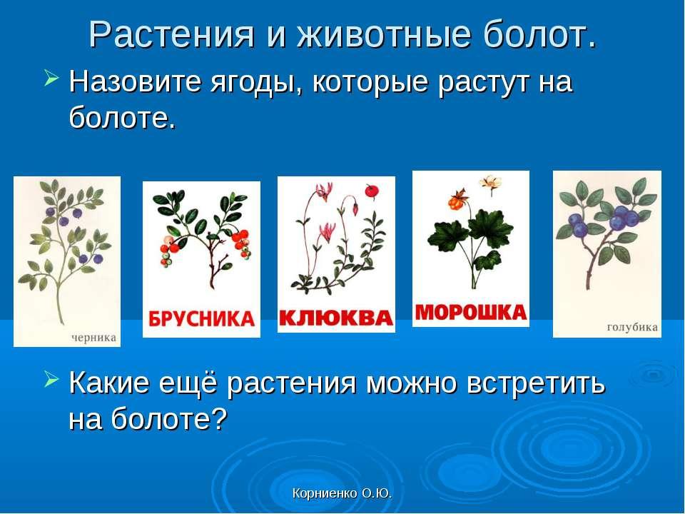 Корниенко О.Ю. Растения и животные болот. Назовите ягоды, которые растут на б...