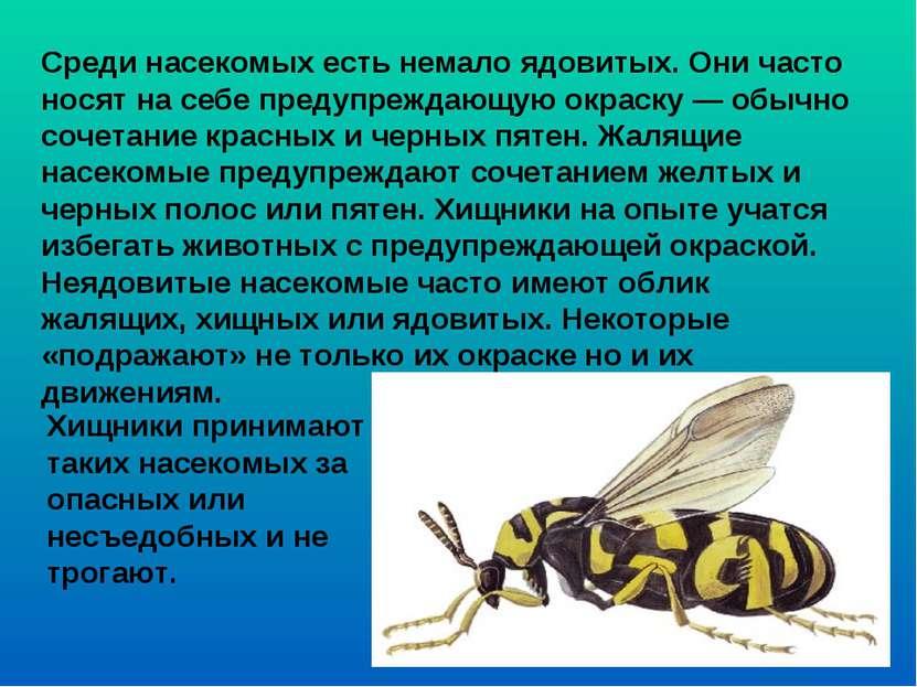 Среди насекомых есть немало ядовитых. Они часто носят на себе предупреждающую...