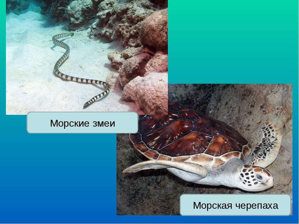 Морская черепаха Морские змеи